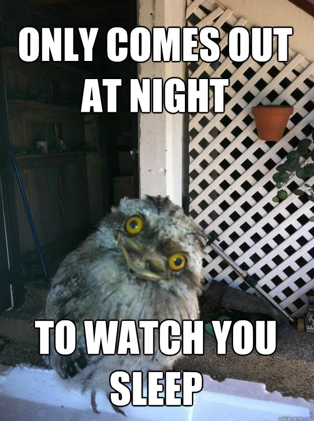 only comes out at night to watch you sleep - only comes out at night to watch you sleep  Overly Attached Owl