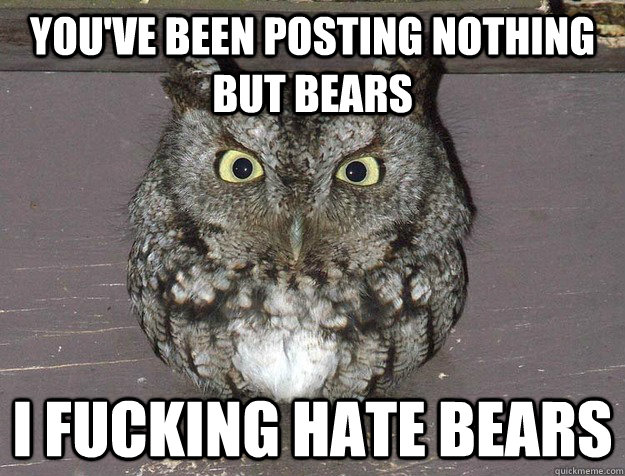 You've been posting nothing but bears I fucking hate bears - You've been posting nothing but bears I fucking hate bears  I Fucking Hate Owl