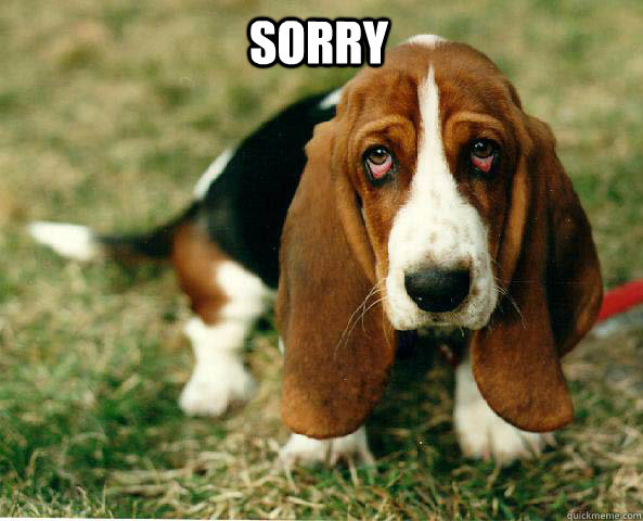 Sorry   Basset Hound of guilt