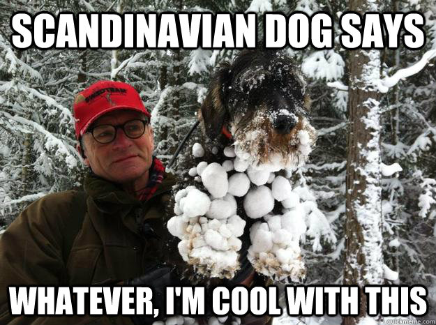 Funny Meme Whatever : Scandinavian dog says whatever i m cool with this