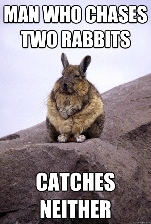 man who chases two rabbits catches neither  Wise Wondering Viscacha