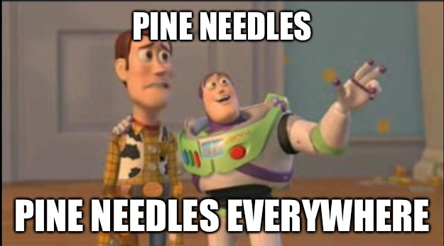 Pine Needles Pine Needles Everywhere - Pine Needles Pine Needles Everywhere  Misc