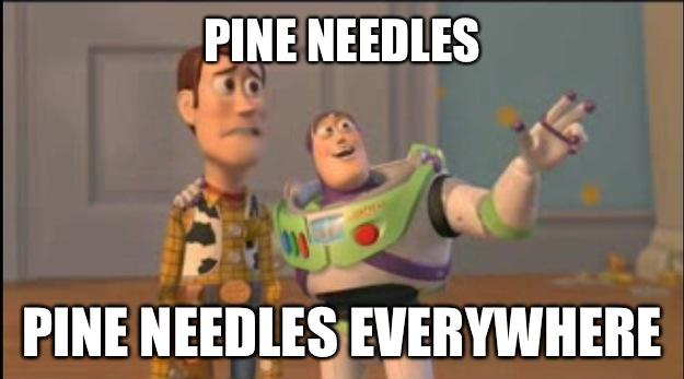 Pine Needles Pine Needles Everywhere - Pine Needles Pine Needles Everywhere  Misc