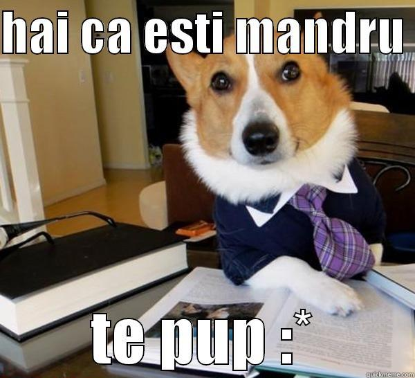 HAI CA ESTI MANDRU  TE PUP :* Lawyer Dog