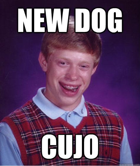 New dog Cujo - New dog Cujo  Bad Luck Brian