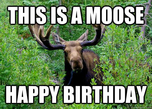 birthday moose memes quickmeme