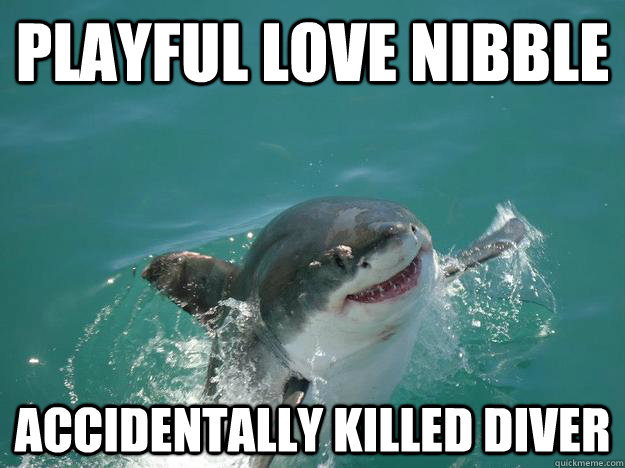 Playful Love nibble Accidentally killed diver  Misunderstood Shark