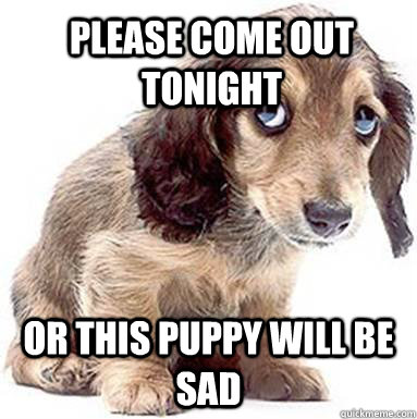 Please come out tonight Or this Puppy will be sad