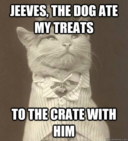 jeeves, the dog ate my treats to the crate with him - jeeves, the dog ate my treats to the crate with him  Aristocat