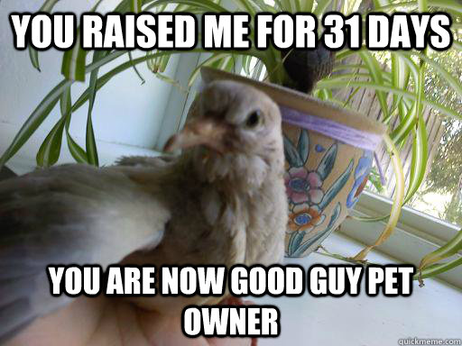 you raised me for 31 days you are now good guy pet owner - you raised me for 31 days you are now good guy pet owner  Misc
