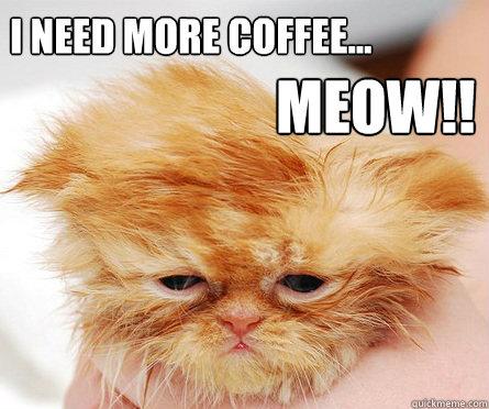 I need more coffee... MEOW!!! - I need more coffee... MEOW!!!  Coffee