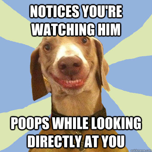 Notices you're watching him poops while looking directly at you  Disgusting Doggy