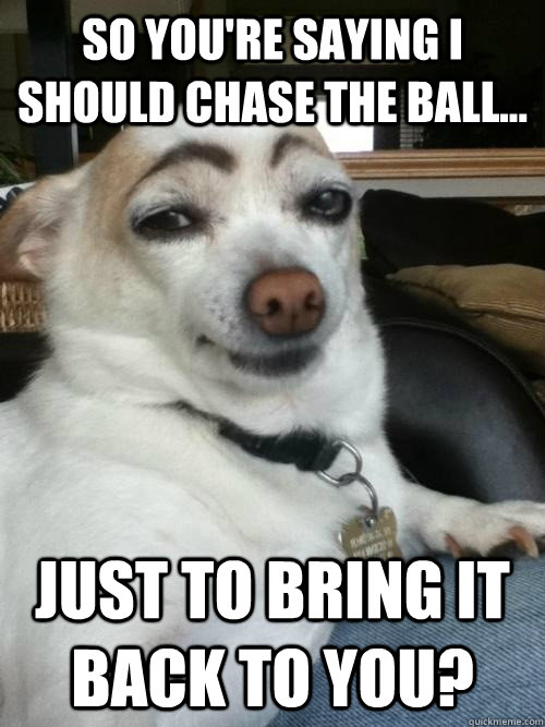 So you're saying i should chase the ball... just to bring it back to you? - So you're saying i should chase the ball... just to bring it back to you?  Skeptical Dog