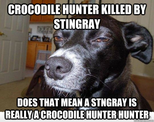 Crocodile hunter killed by stingray does that mean a stngray is really a crocodile hunter hunter  Skeptical Dog is Skeptical