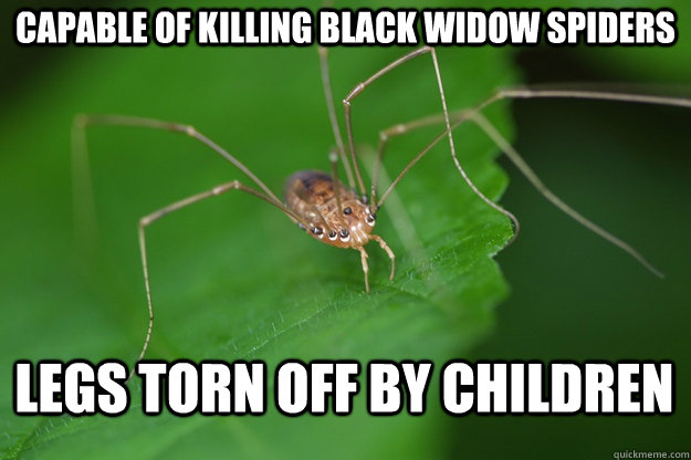 Capable of killing Black widow spiders Legs torn off by children - Capable of killing Black widow spiders Legs torn off by children  Misc