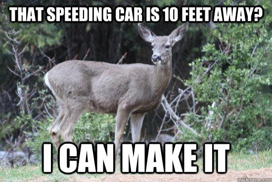 That speeding car is 10 feet away? I can make it  Daredevil Deer