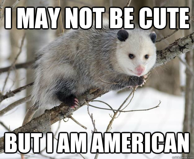 Opossum Memes Quickmeme