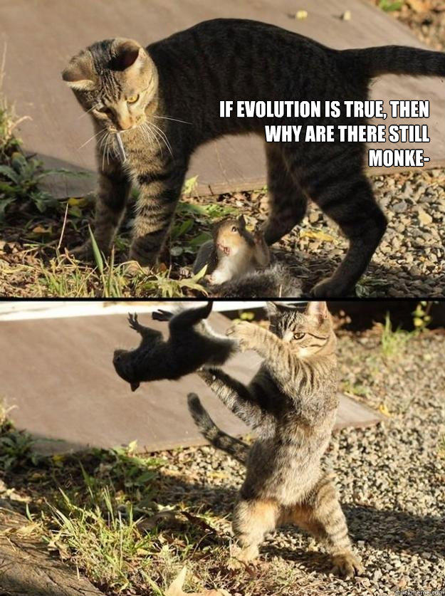 If evolution is true, then why are there still monke-  Annoying Squirrel