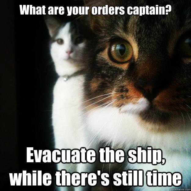 What are your orders captain? Evacuate the ship, while there's still time - What are your orders captain? Evacuate the ship, while there's still time  Concerned Cat