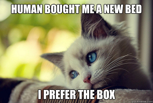 HUMAN BOUGHT ME A NEW BED I PREFER THE BOX - HUMAN BOUGHT ME A NEW BED I PREFER THE BOX  First World Cat Problems