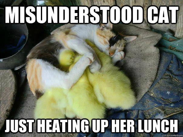 Misunderstood cat Just heating up her lunch - Misunderstood cat Just heating up her lunch  Misc