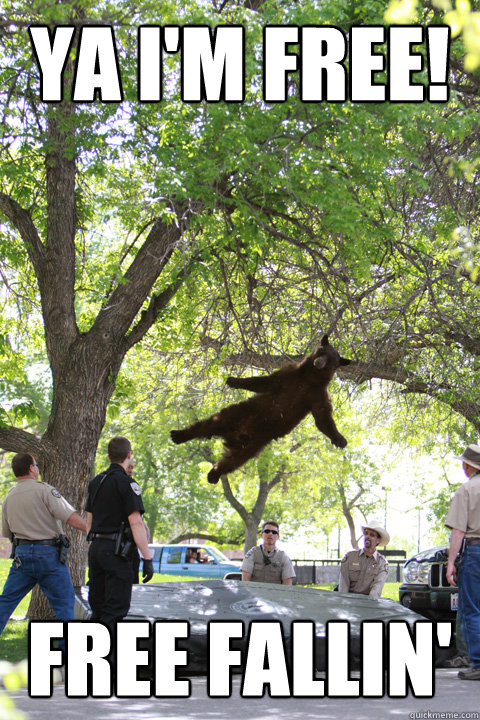 Ya I'm Free! Free Fallin' - Ya I'm Free! Free Fallin'  Boulder Bear