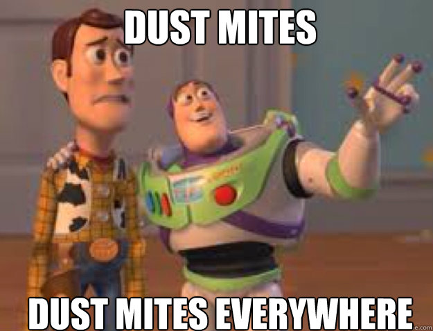 dust mites dust mites everywhere