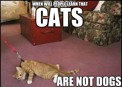 cats are not dogs when will people learn that - cats are not dogs when will people learn that  Cats are not dogs
