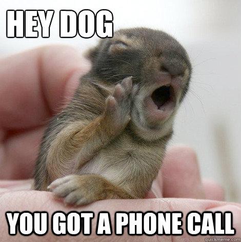Dog Phone Meme Hey Dog You Got a Phone Call