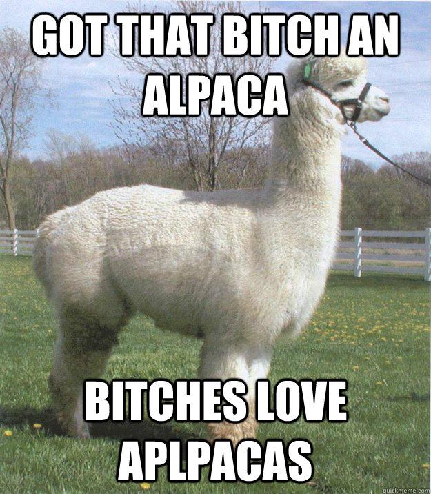 got that bitch an alpaca bitches love aplpacas bitches love alpacas