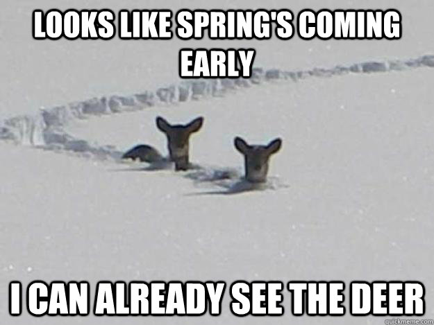 Looks Like Springs Coming Early I Can Already See The Deer