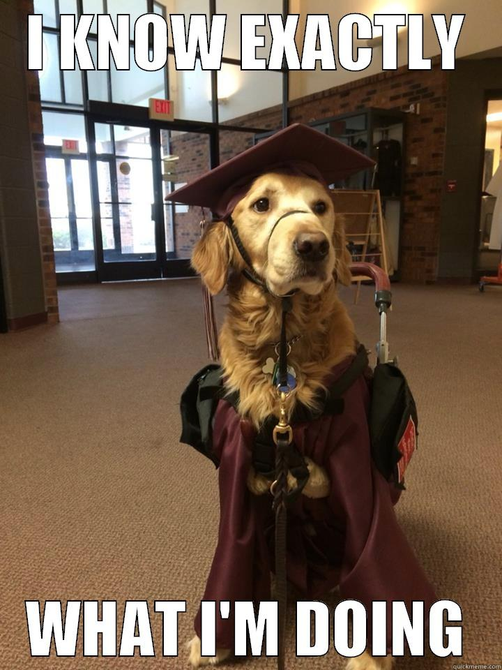 Smart Dog Being Smart Quickmeme