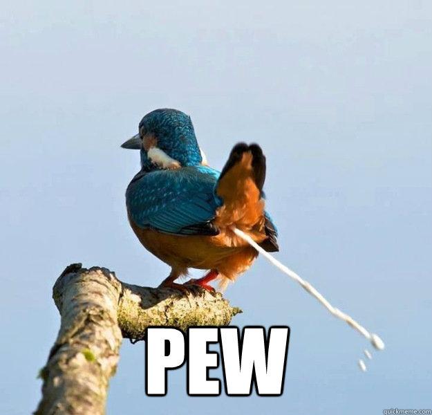 pew -  pew  Pew Bird
