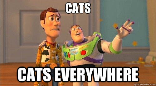 cats cats Everywhere