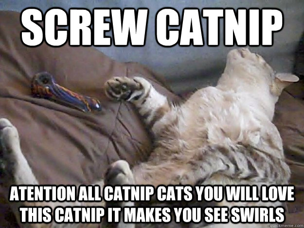 screw catnip atention all catnip cats you will love this catnip it makes you see swirls