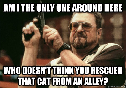 Am I the only one around here who doesn't think you rescued that cat from an alley?  - Am I the only one around here who doesn't think you rescued that cat from an alley?   Am I the only one
