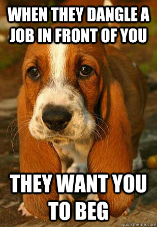When they dangle a job in front of you They want you to beg  Unemployable Basset Hound Puppy