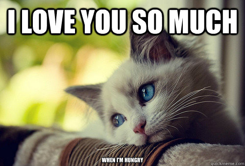 I love you so much when i'm hungry - I love you so much when i'm hungry  First World Problems Cat