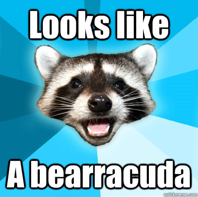 Looks like  A bearracuda - Looks like  A bearracuda  Lame Pun Coon