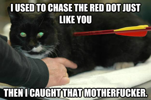 I used to chase the red dot just like you Then I caught that motherfucker.  Worlds Toughest Cat