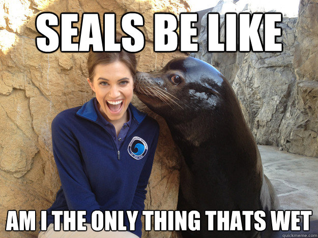 seals be like am i the only thing thats wet - seals be like am i the only thing thats wet  Crazy Secret