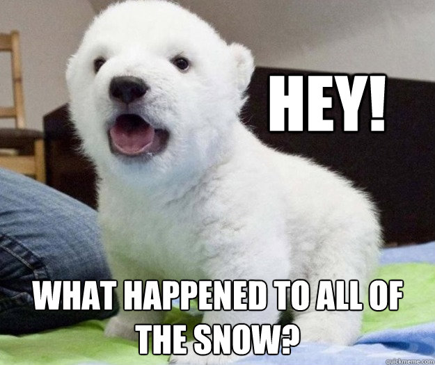 Hey What Happened To All Of The Snow Baby Polar Bear Quickmeme