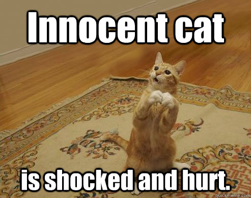 Innocent cat is shocked and hurt.