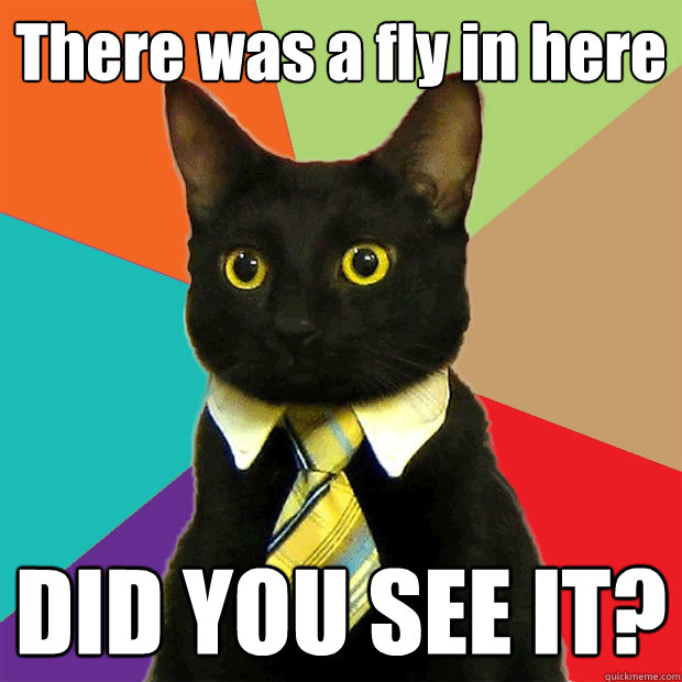 There was a fly in here DID YOU SEE IT? - There was a fly in here DID YOU SEE IT?  Business Cat