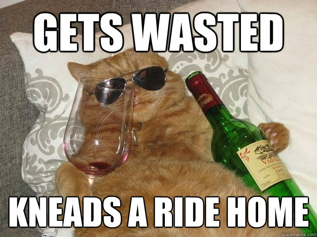 Gets wasted kneads a ride home - Gets wasted kneads a ride home  Party Cat