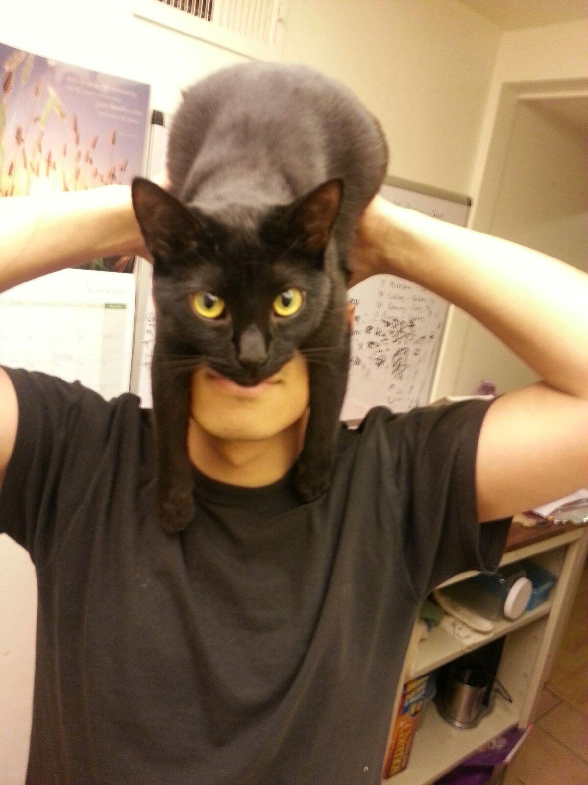 I am vengeance, I am the night, I...am...CATMAN! -   Misc