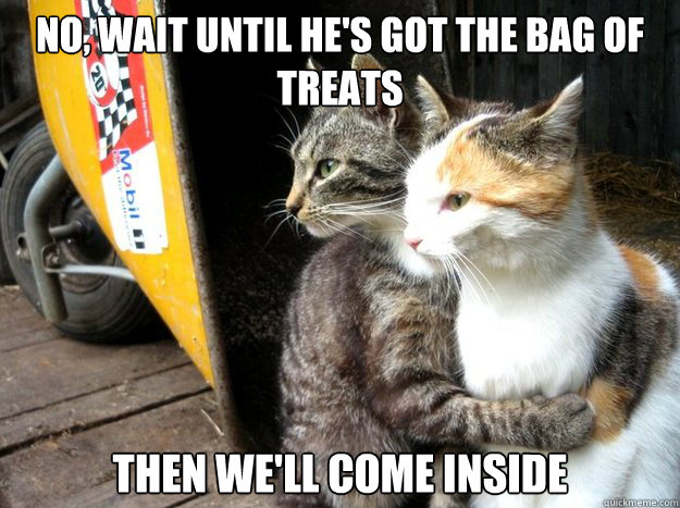 No, wait until he's got the bag of treats Then we'll come inside - No, wait until he's got the bag of treats Then we'll come inside  Restraining Cat