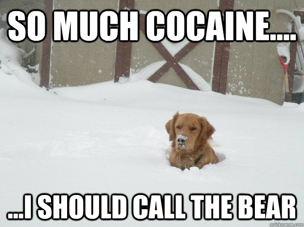 Cocaine Animals In 14 Memes The Grasshopper