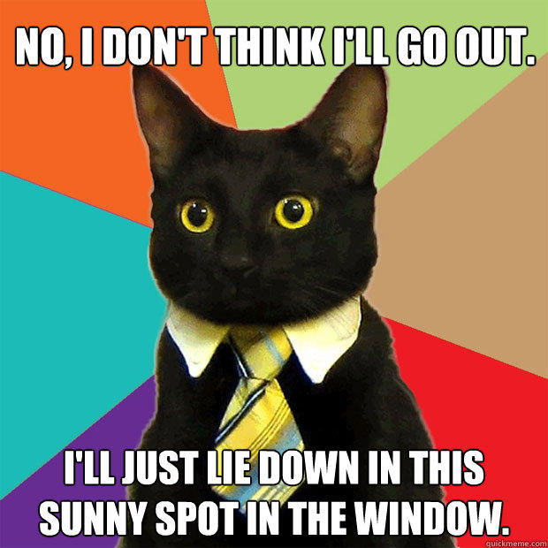 No, I don't think I'll go out. I'll just lie down in this sunny spot in the window. - No, I don't think I'll go out. I'll just lie down in this sunny spot in the window.  Business Cat
