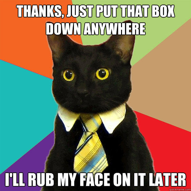 Thanks, just put that box down anywhere I'll rub my face on it later - Thanks, just put that box down anywhere I'll rub my face on it later  Business Cat